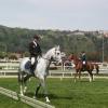 Degrado alla Scuola Napoletana d'Equitazione